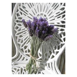 <i>Lavender</i> sweet Lavender