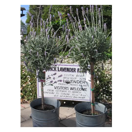 Welcome to Teatrick <i>Lavender</i> Estate